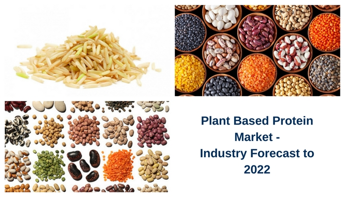 plant based protein market
